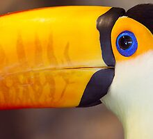 Toucan by Bobby McLeod