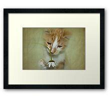 Playful Puss Framed Print