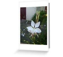 Wonderful White Greeting Card