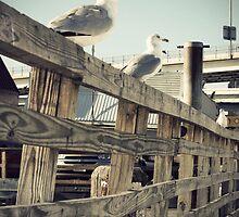 Birds by Jonathan  Yuen
