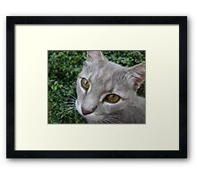 Earl eyes Framed Print