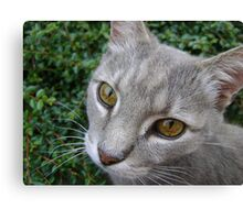 Earl eyes Canvas Print