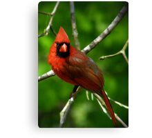 """Male  Northern Cardinal"" Canvas Print"