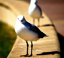 Seaguls by Erin-Louise Hickson