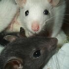 Rat babies by KanaShow