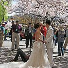Blissful Cherry Blossom Day by phil decocco