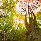 Tree of Life by Dan Jesperson