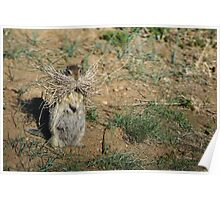 A Caring Ground Squirrel Mother Poster