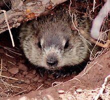 Groundhog III by Kathleen Daley