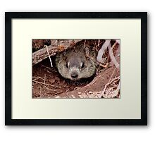Groundhog III Framed Print