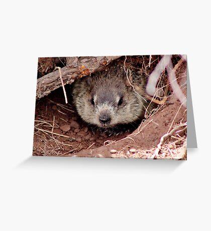 Groundhog III Greeting Card