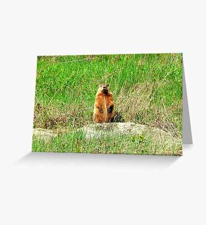 Groundhog Greeting Card