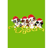 4 Cute Puppies Seasons Greetings Photographic Print