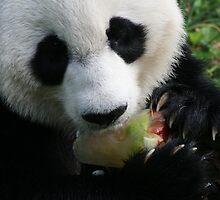 Panda by Jonathan  Yuen