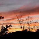 Sunset in my garden by Shulie1