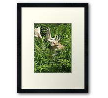 Elegant Stag Framed Print