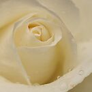 White  by Martina Fagan
