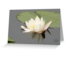 Lily Of The Water Element Greeting Card