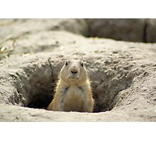 Eye contact with prairiedog ( Cynomys)  Photographic Print