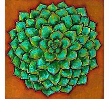 Succulent Mandala Photographic Print