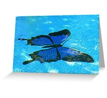 Ulysses Butterfly, Dunk Island Greeting Card