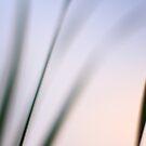 evening grass by Angela King-Jones