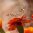 Wings wide open by Silvia Solberg