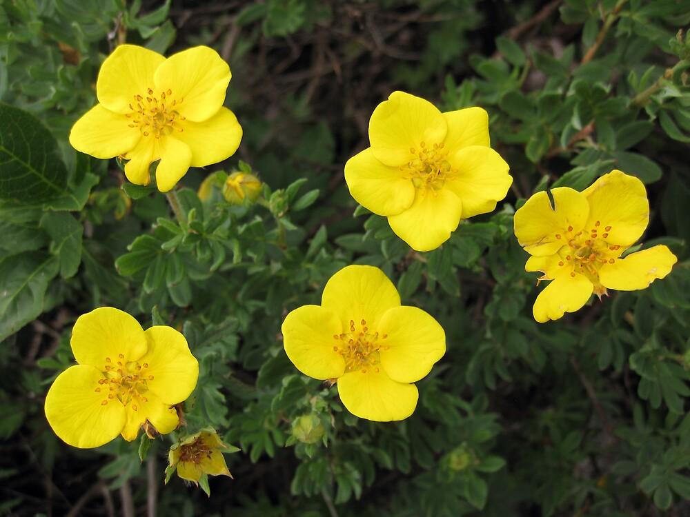 Burren Flowers by John Quinn
