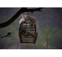 Mother feeding her captive babies Photographic Print