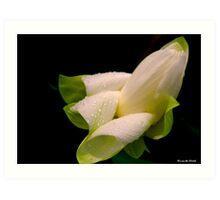 White Lotus Art Print
