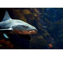 Leopard Shark Photographic Print