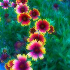 Florida Wildflowers by Heather Short