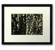 Sharp Shapes and Shadows - Cactus Garden Framed Print