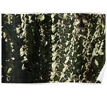 Sharp Shapes and Shadows - Cactus Garden Poster
