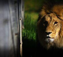 Lions den by pyan