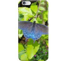 Blue Pipevine Butterfly iPhone Case/Skin