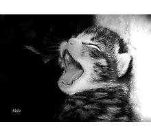 Singing Photographic Print