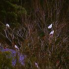 Bundanon Birds by tmac