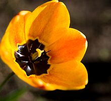 All the pretty flowers #2 by Mariann Rea