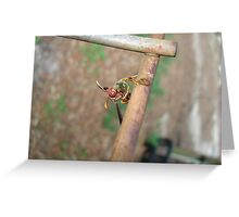 Wasp with Prey Greeting Card
