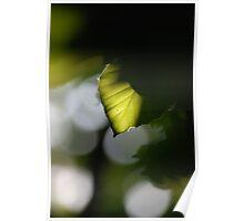 Sunlit Poster