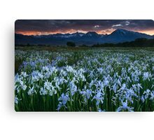 Wild Iris and Sierra Sunset Canvas Print