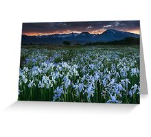 Wild Iris and Sierra Sunset Greeting Card