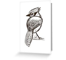 Blue Jay Sketch Greeting Card