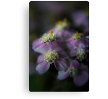 Today I am beauty  (from wild flowers collection) Canvas Print