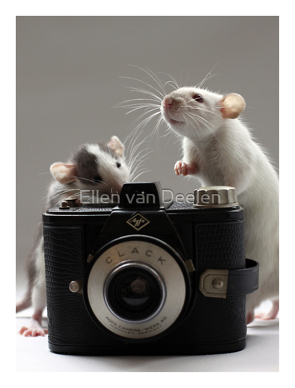 """""""What do you think? Shall we buy this one or a digital?"""" by Ellen van Deelen"""