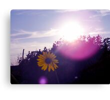 Shining Sunflower Canvas Print
