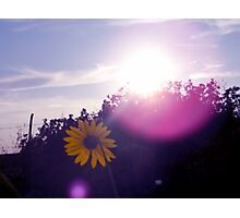 Shining Sunflower Photographic Print