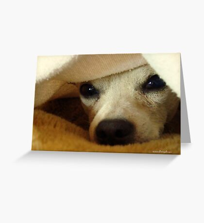 Lil' Bit And His Blanket #2...Tough Three Weeks Greeting Card