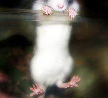 """Little Escape Artist"" by Melinda Stewart Page"